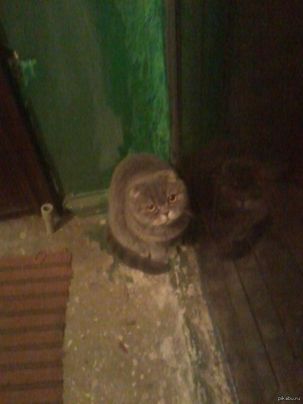 Потеряшка! Вышел покурить, а у соседской двери такое вот чудо! Чей не понятно!
