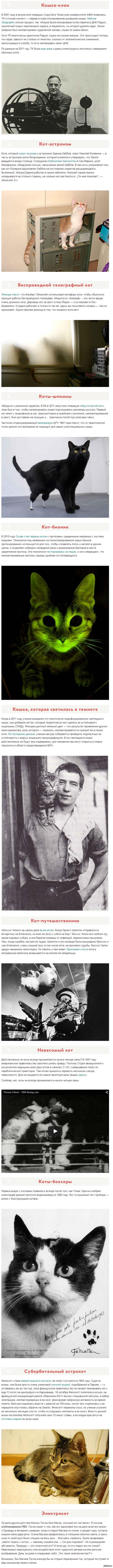 11 главных котов науки Светящийся кот, кот Николы Теслы, кошка-клон, не похожая на оригинал, и другие.