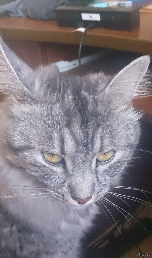 Этот кот явно чем-то не доволен...