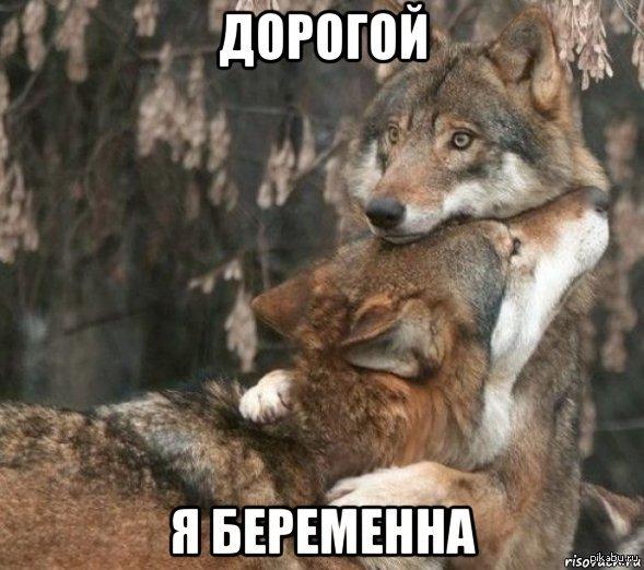 картинки волк шо опять