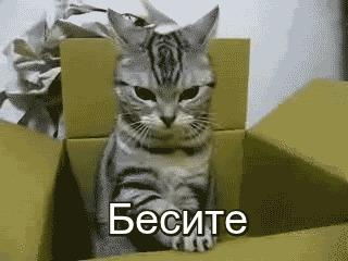 Биологи объяснили любовь кошек к коробкам! Оказалось, что забираясь в ящики, питомцы пытаются бороться со стрессом.