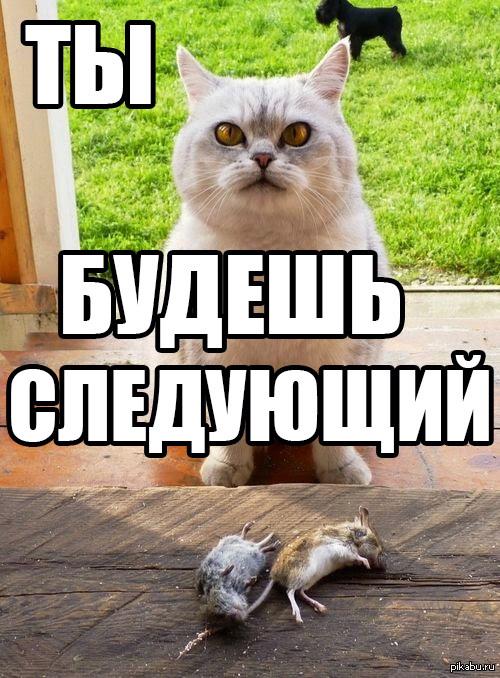 """Ты будешь следующий! Навеяно постом <a href=""""http://pikabu.ru/story/koshachi_valentinki_ne_tak_naryadnyi_zato_ot_dushi_3082913"""">http://pikabu.ru/story/_3082913</a>"""