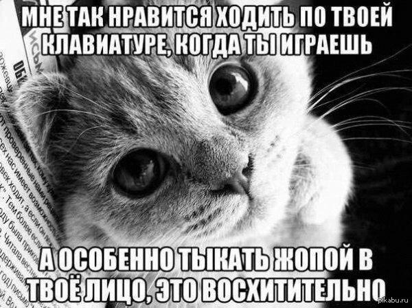 Кошки... с просторов
