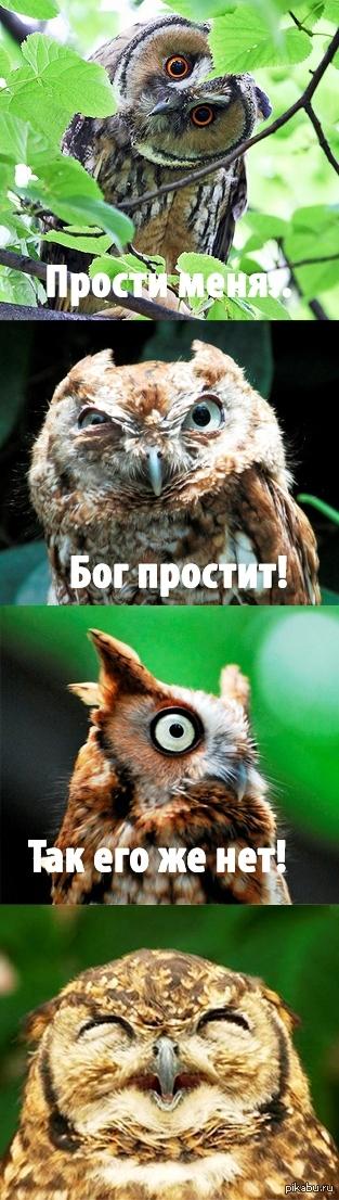 ой все картинки сова обиделась рассказали лучших