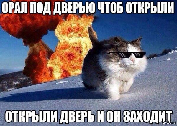 cat acting aggressive