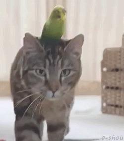 Интересно: кто из них главный? кот еще и говорит что-то явно ругательное