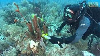 Морские губки Тест который показывает как губки фильтруют воду.  Внутри еще гифки
