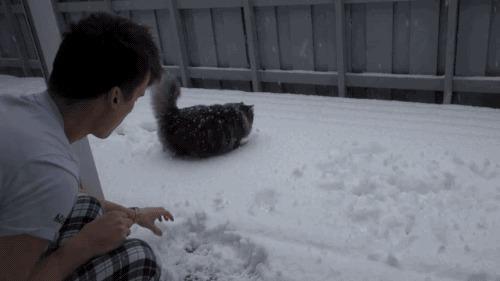 Любитель снега