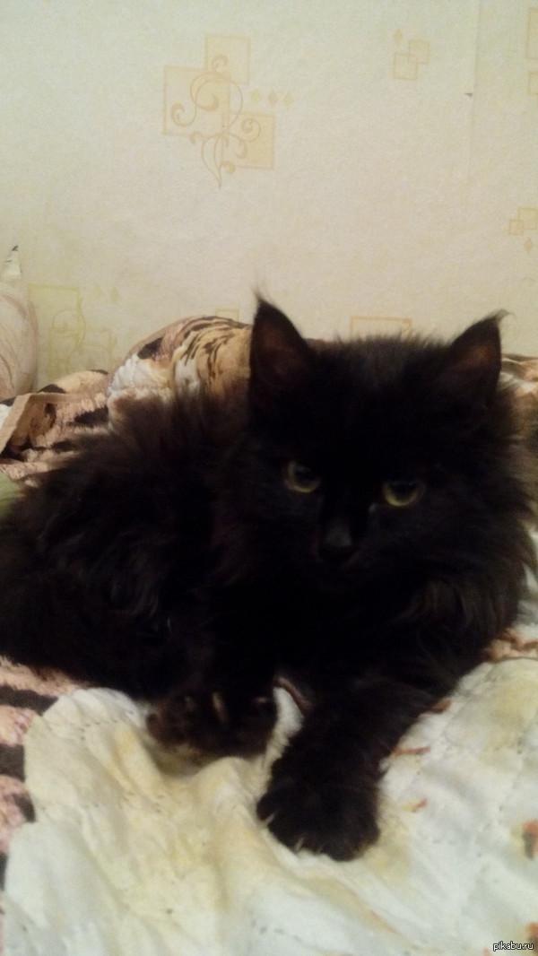 Теперь и у меня есть подобная прелесть, малышка Киара :) Впервые увидел, чтобы котенок совсем не боялся воды О_о