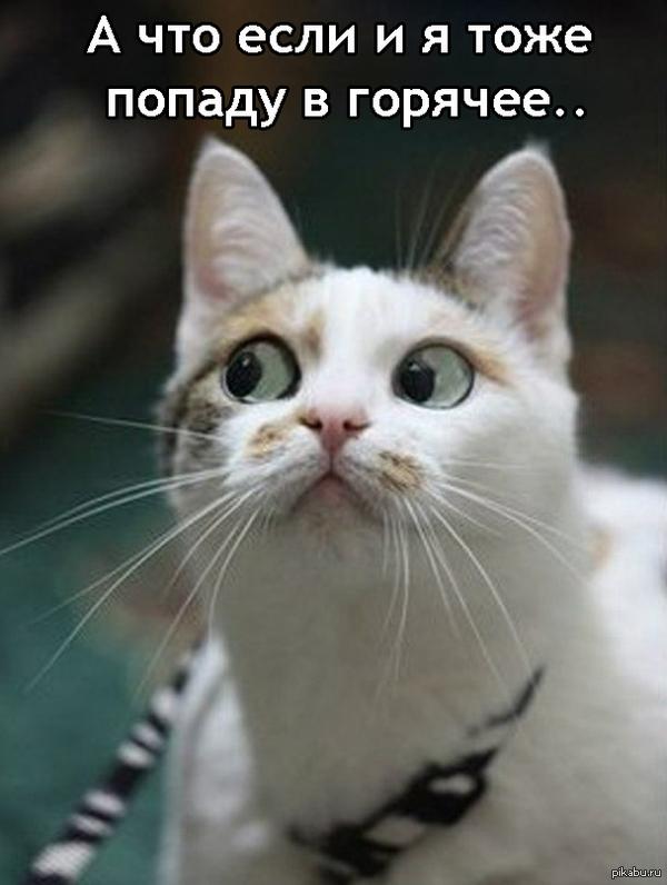 feline tick treatment