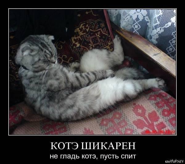 Толстые коты демотиватор