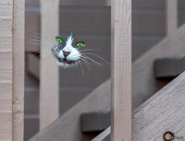 """...дааа, видала я котов без улыбок, но улыбку без кота вижу первый раз.."" К посту <a href=""http://pikabu.ru/story/cheshirskiy_kot_ya_nashel_tebya_3230093"">http://pikabu.ru/story/_3230093</a>"