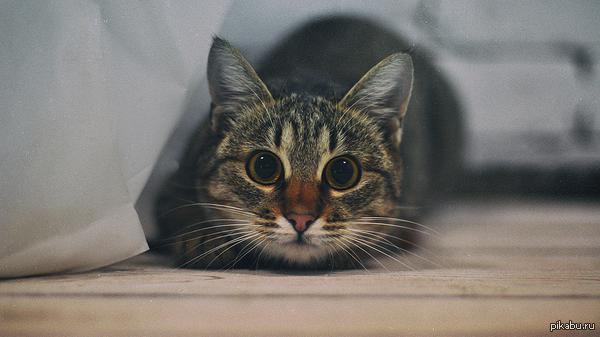 Эти глаза напротив приблудилась эта котейка к нам на работу, такой вот момент словила :) через доли секунды следующим кадром уже смазанный прыжок