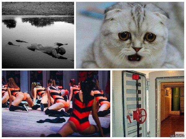 Meanwhile in Syktyvkar. Сыктывкар за неделю: ремонт бомбоубежища, ограбление приюта для кошек и труп в луже.