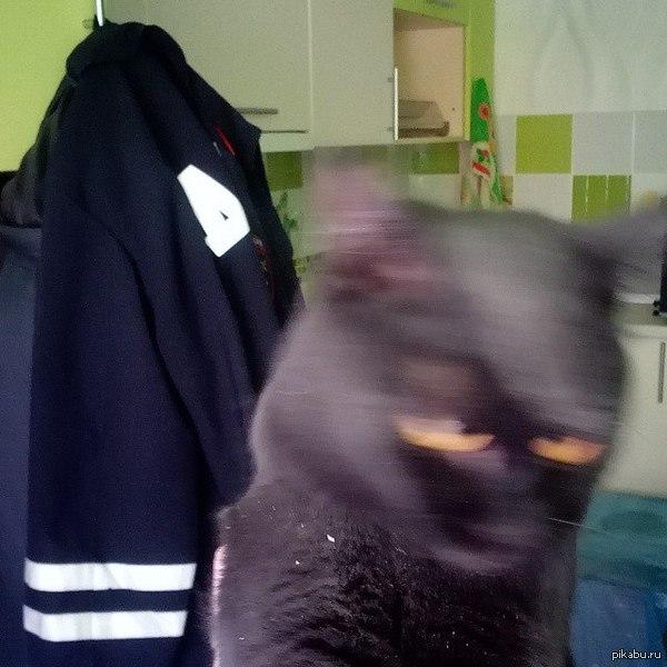 Пыталась сфотографировать вымазавшуюся в строительной пыли кошку... По-ходу это её истинное лицо... Теперь боюсь оставаться с ней наедине...