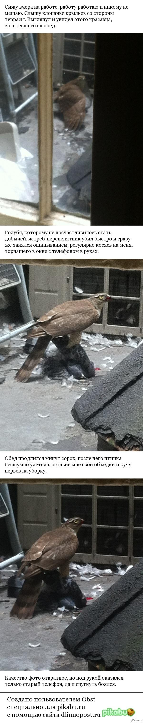 Посреди бела дня, в центре мегаполиса. Не знал, что хищные птицы охотятся в больших городах.
