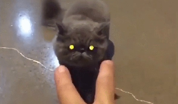 Неудачное нападение (Кот настолько суров, что под ним даже пол потрескался))