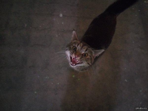 Найден кот В подъезде дома найден кот. Видно что домашний, но точно не из этого подъезда, т.к. никто не забирает и сам кот носится туда сюда не зная куда податься.
