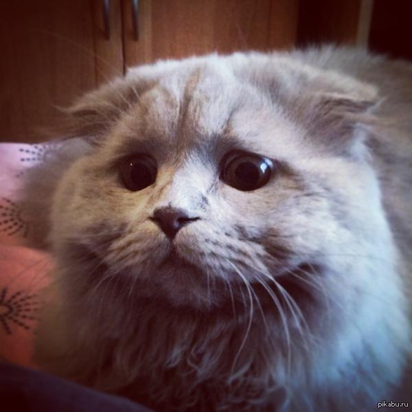 Кот на охоте Так мой кот выглядит перед нападением на что угодно.