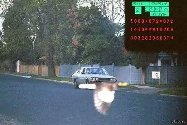 Птица спасла от штрафа за превышение скорости
