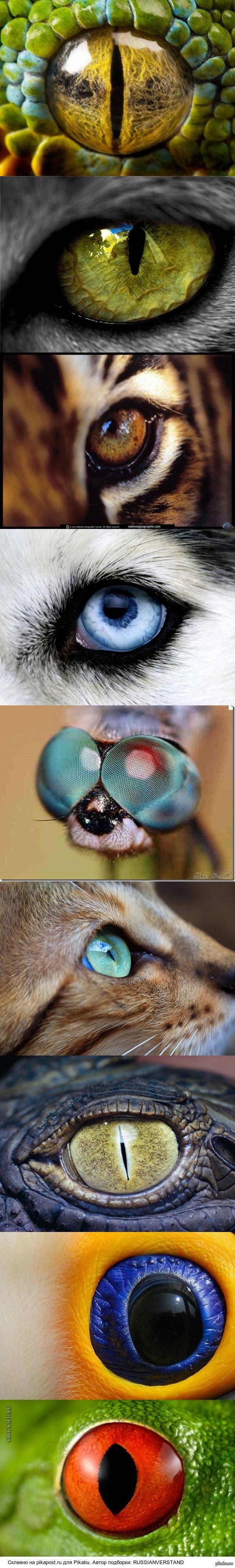 Подборка потрясающих фотографий глаз животных.