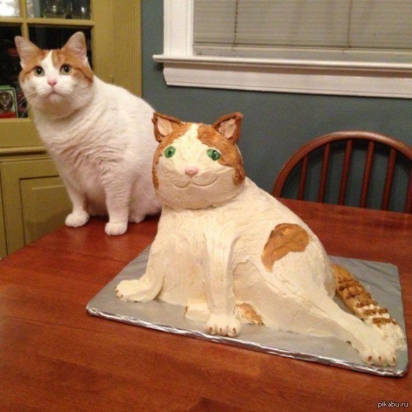 Торт и кот картинка