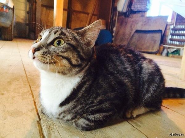 Котик ищет дом. Может кто хочет взять к себе игривого, ласкового, не привередливого к еде кота? Ему от силы 6-7 месяцев, домашний (он уже был приучен к лотку).
