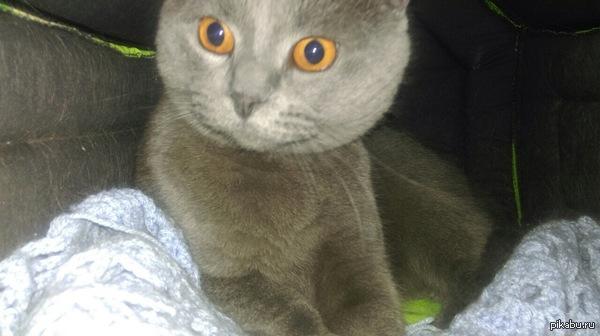 Кот в недоумении почему на его частную территорию лезут с фотокамерами?  (криво cфоткал на НТС One mini2)