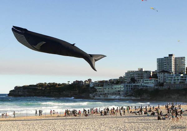 Летающий кит На фестивале воздушных змеев.