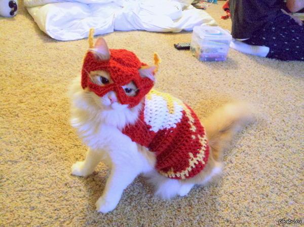 """Меня зовут Барсик, и я самый быстрый кот на Земле"""