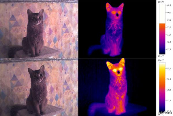 Тепловизионная съемка котейки :) Во время зарядки тепловизора решил посмотреть как выглядят кошки в инфрокрасных лучах... проще говоря на термограмме.  (если интересно могу собакена выложить)