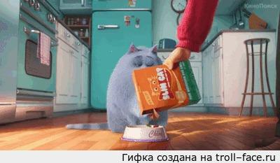 Когда кот намекает что хочет другую еду