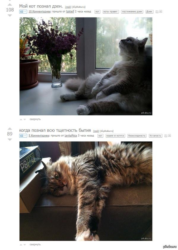 Коты философы на пикабу совпало