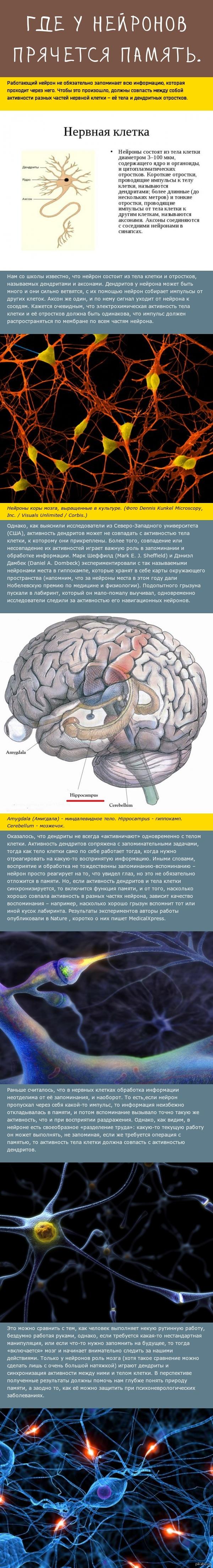 Немного о нейронах и запоминании.