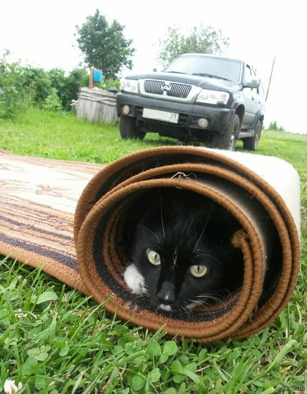 Котейка в засаде Рулет с котом :) SG S4mini.