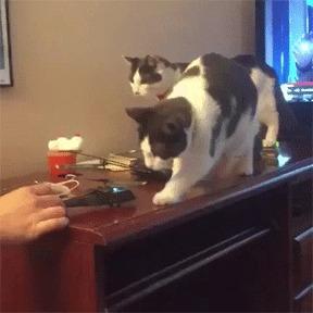 Коты и вертолёт