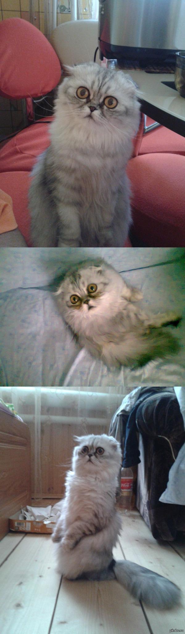 Кот, который видел некоторое дерьмо в этой жизни. Увидел в ВК просьбу пристроить кота, по моему коту жилось не очень.
