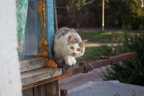 Сосед за окном Выглянул в окно и встретился взглядом с соседом, не удержался и сфоткал