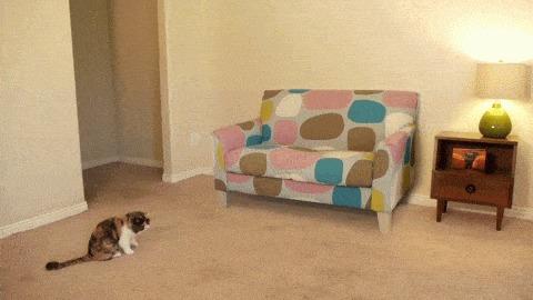 Когда коту лень лезть под диван