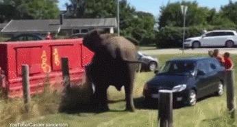 Добрый слоник помогает вытащить машину из кювета