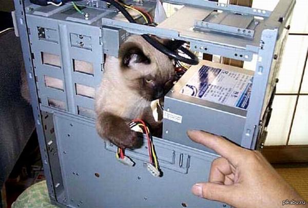 Кот, админ, шредер тут был негодный пикабушникам пост, поэтому вот вам котоадмин