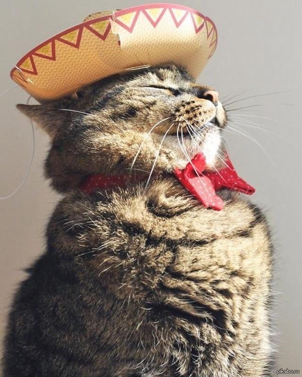 Мексиканец в сомбреро