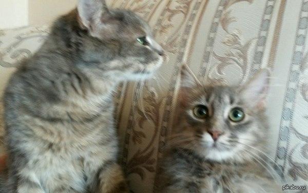 Пару месяцев назад мы хотели отдать ее, но старший кот полюбил ее и научил ее делать сэлфи и позировать на камеру.