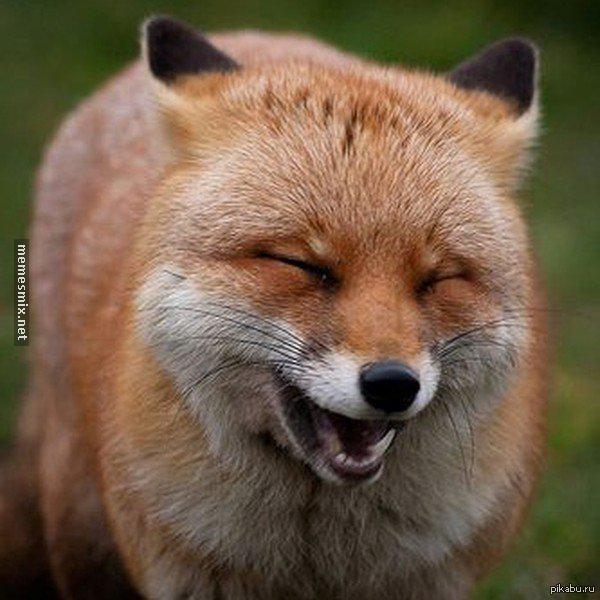 """Когда увидел, что соседских пса и кота ведут к ветеринару в ответ на <a href=""""http://pikabu.ru/story/_3563439"""">http://pikabu.ru/story/_3563439</a>"""