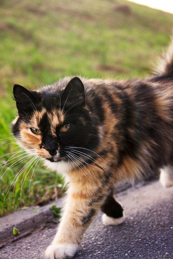 Почти тигр Гулял по Великому Новгороду, наткнулся на очаровательную кошку, не мог не снять))