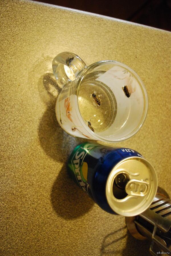 У Ос тоже жажда. Раньше слышал что осы очень любят спрайт. Решил протестировать, поставил открытую банку этого напитка. Через 20 минут там уже тусило 3 осы.