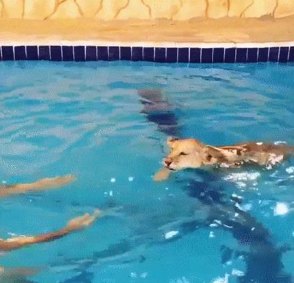 Киса купается
