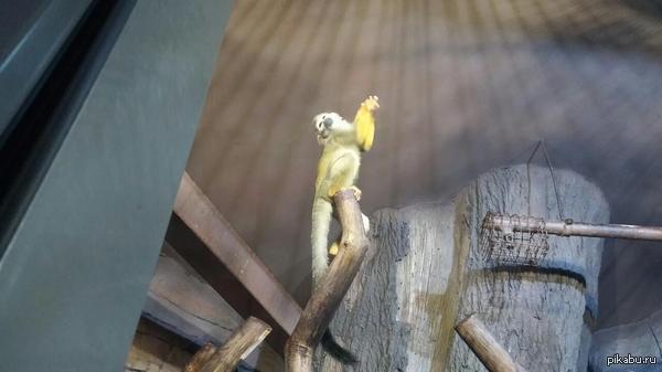 Вот такое чудо позировало мне в зоопарке Даже замер на пару секунд в такой позе, чтобы я успел сфоткать))
