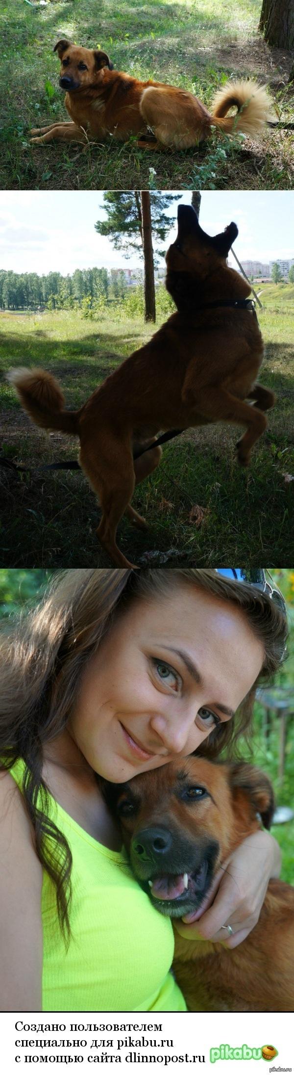 Сбылась мечта) Котики, конечно, хорошо, но для полного счастья мне не хватало собаки. А приютскому собачонке не хватало любви и внимания. Мы нашли друг друга)