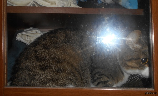 Странный кот, в коробках не сидит, в пакеты не лазит (только дрет), а в шкафу живет.